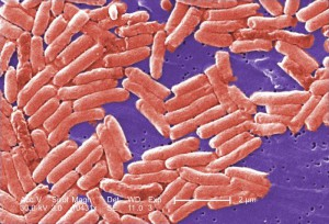 Salmonella Tests and Analysis