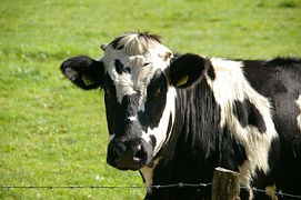 Illegal Drug Residues Testing in the Dairy Industry